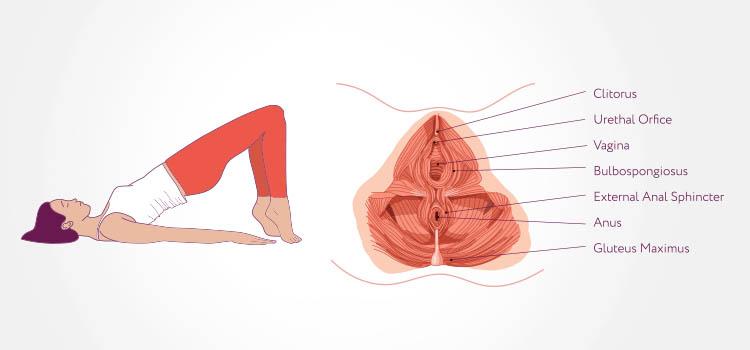 rieducazione perineale esercizi kegel